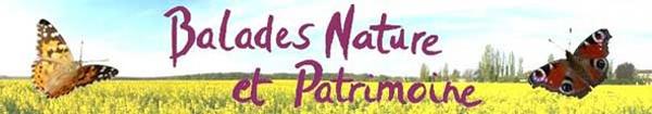 Actualités Rambouillet - Balades Nature et Patrimoine