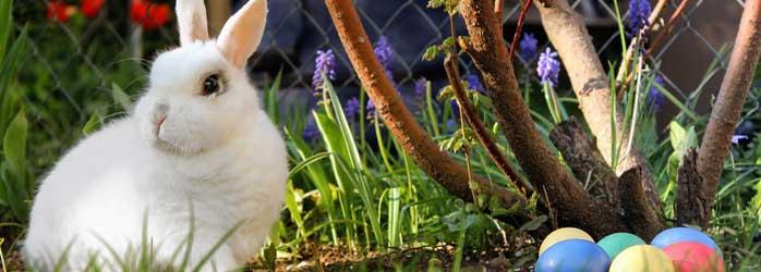 Actualités Rambouillet - À la recherche du lapin de Pâques à l'Espace Rambouillet