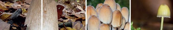 Exposition champignons à Clairefontaine-en-Yvelines
