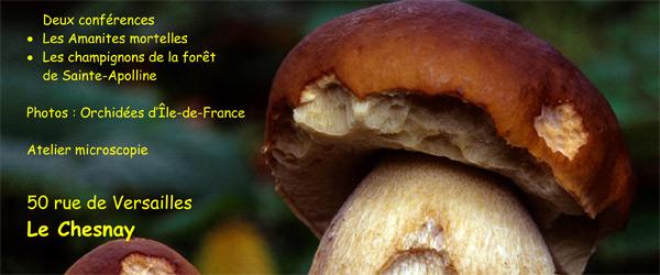 Actualités Rambouillet - Exposition de champignons à la Salle des fêtes du Chesnay les 20 et 21 octobre 2018