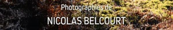 Actualités Rambouillet - La forêt de Rambouillet à La Lanterne, une exposition du photographe Nicolas Belcourt