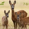 Actualités Rambouillet - Photo animalière Forêt Rambouillet