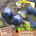 Actualités Rambouillet - Rambouillet Cueillettes forestières