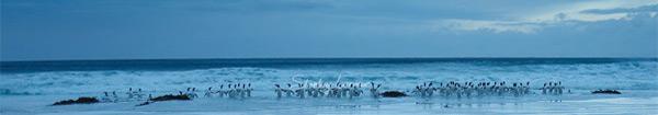 Actualités Rambouillet - Les cinquantièmes hurlants, les îles subantarctiques à La Lanterne jusqu'au 30 septembre 2017