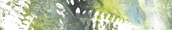 Actualités Rambouillet - Exposition La forêt dévoilée au Pôle culturel la Lanterne à Rambouillet